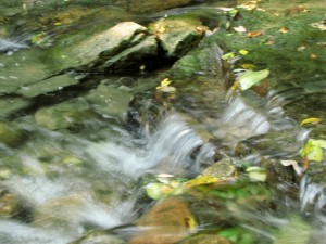 Murmuring to the Don, by mm