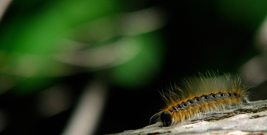caterpillar on the move