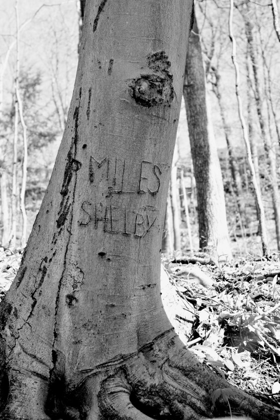 Name carved in tree trunk