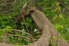 Fallen trunk amidst greenery by mm
